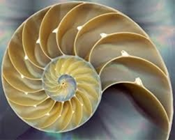 Il compasso di Fibonacci