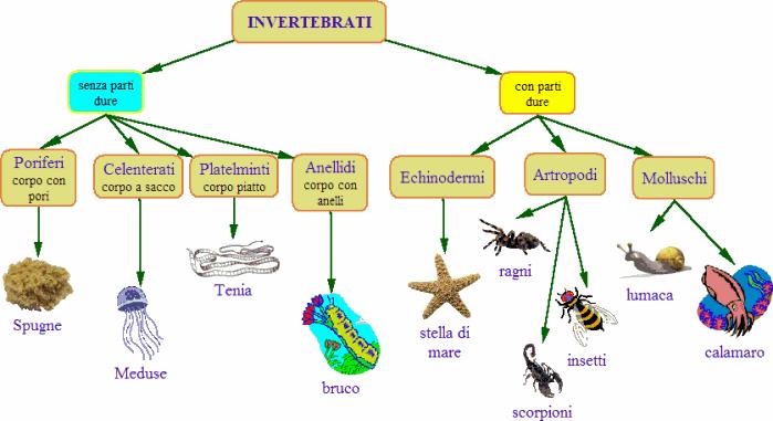 Domande sugli invertebrati